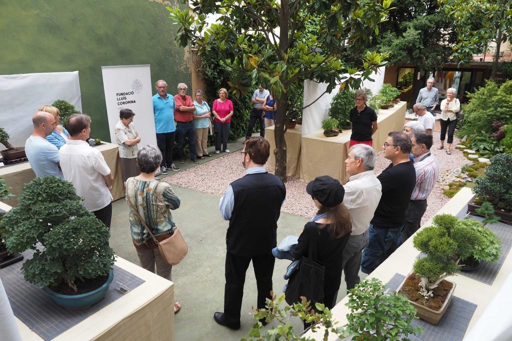 29/05/15 Inauguració de la mostra de Bonsais a l'espai Eat Art en el marc de la 38a Exposició de Flors de Banyoles. FOTO:PERE DURAN